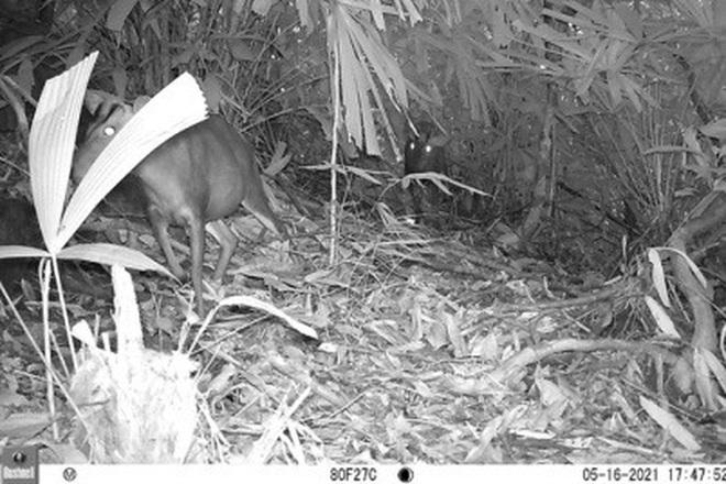 Phát hiện nhiều động vật hoang dã hiếm thấy ở Thừa Thiên Huế - 3