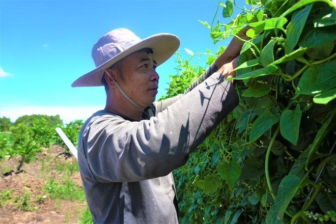 Nông dân đổi đời nhờ trồng mồng tơi bán hạt - 1