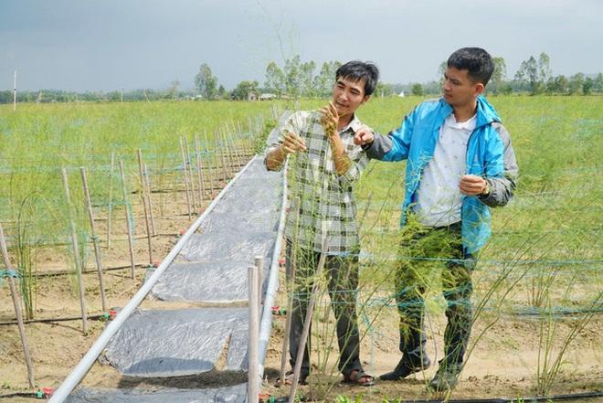 Chàng trai 8X kiếm trăm triệu đồng với mô hình nông nghiệp tuần hoàn mới lạ - 1