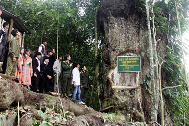 lao-cai-cay-go-nghien-1-1623339205097.jpeg