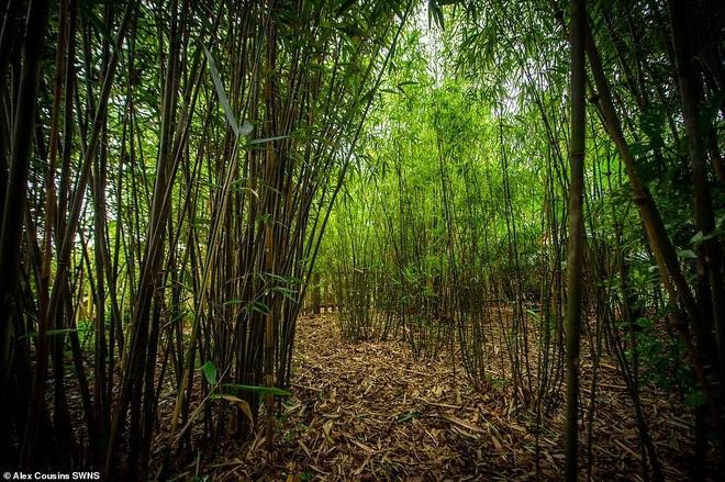 Người đàn ông hơn 30 năm tạo khu rừng giữa phố - 2