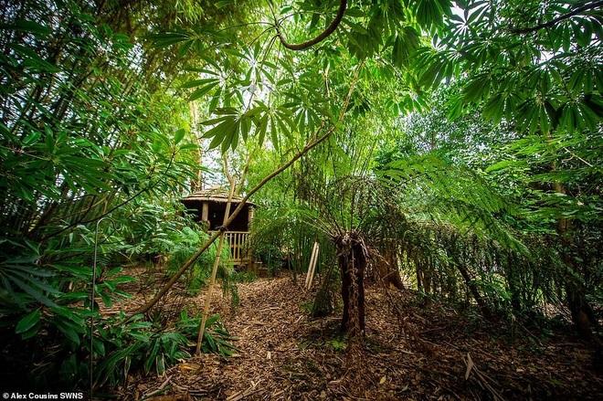 Người đàn ông hơn 30 năm tạo khu rừng giữa phố - 6