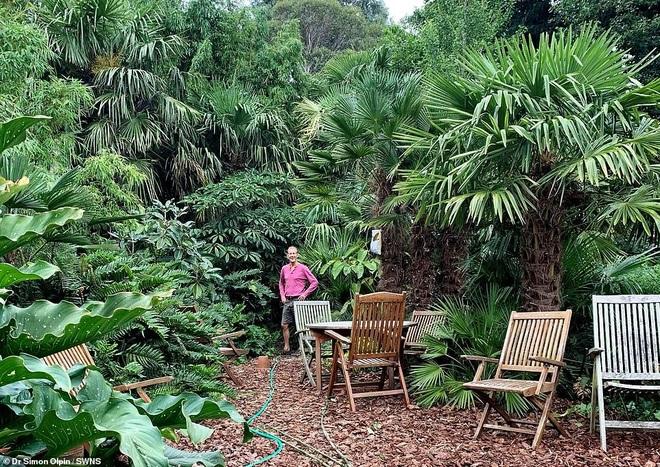 Người đàn ông hơn 30 năm tạo khu rừng giữa phố - 7