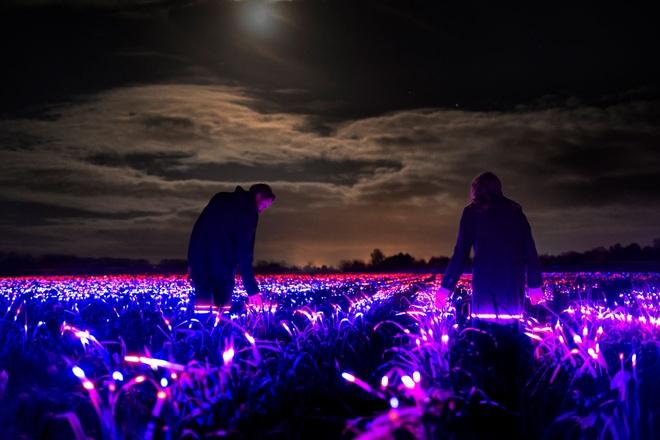 Bí thuật ánh sáng xanh, đỏ trên trang trại và mục đích bất ngờ đằng sau - 3