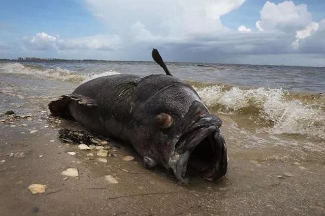 Câu được cá khổng lồ quý hiếm, ai cũng hết hồn vì trông như quái vật biển - 1