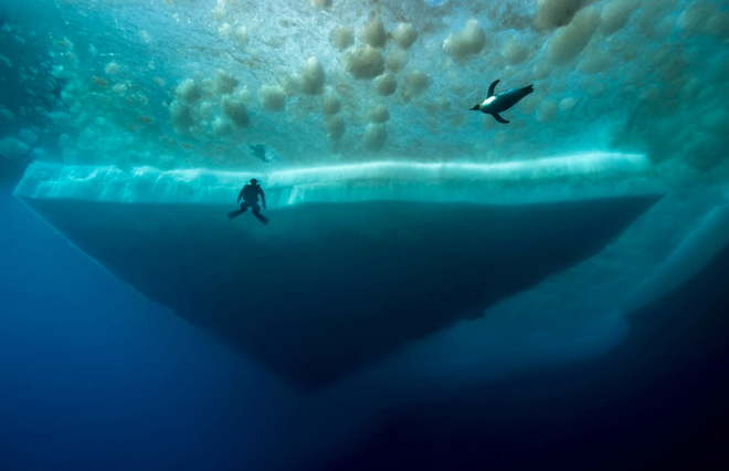 10 sự thật thú vị về Nam Đại Dương - 4