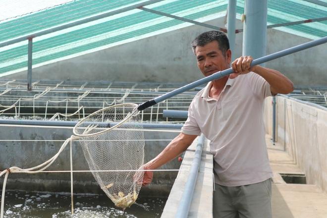Cựu chiến binh lãi gần 1 tỷ đồng mỗi năm nhờ nuôi tôm kiểu mới - 2