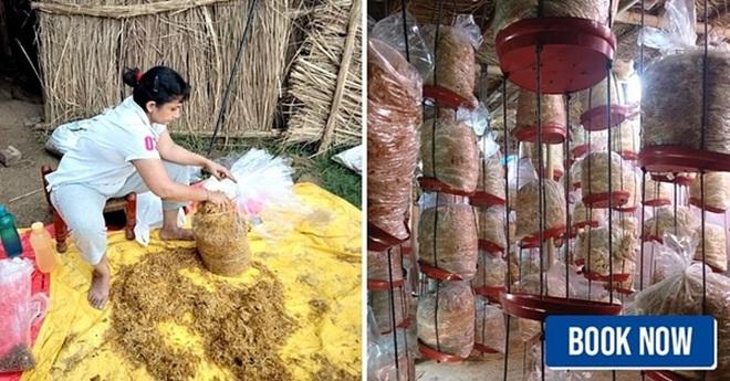 Quyết định nghỉ việc, người phụ nữ trồng nấm sạch kiếm hơn 30 triệu/tháng - 1