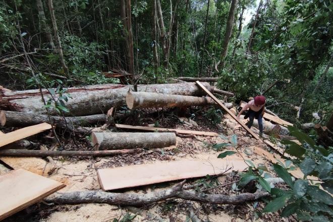 Khởi tố vụ phá rừng quy mô lớn mà báo Dân trí phản ánh tại Gia Lai - 1