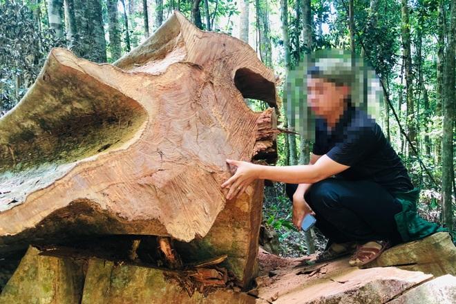 Khởi tố vụ phá rừng quy mô lớn mà báo Dân trí phản ánh tại Gia Lai - 2
