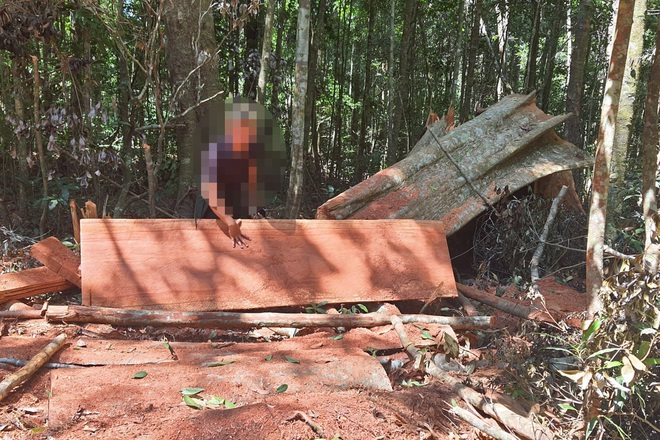 Khởi tố vụ phá rừng quy mô lớn mà báo Dân trí phản ánh tại Gia Lai - 3