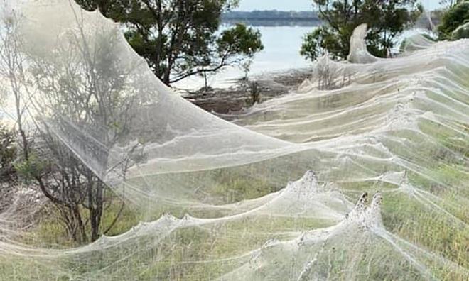 Mạng nhện khổng lồ như phim khoa học viễn tưởng khiến dân bản địa sợ hãi - 1