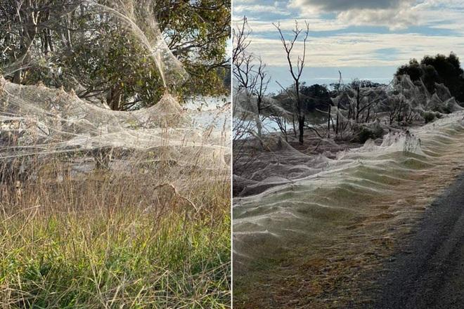 Mạng nhện khổng lồ như phim khoa học viễn tưởng khiến dân bản địa sợ hãi - 2