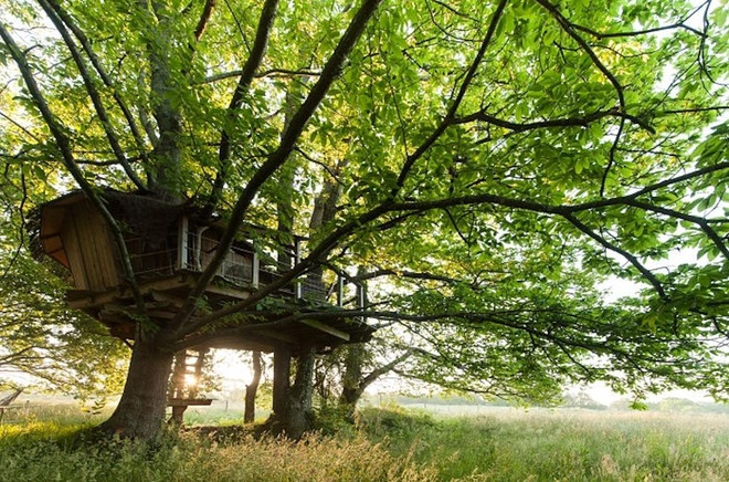 Những tuyệt tác nhà lơ lửng trên cây đẹp tới mức khó tin - 14