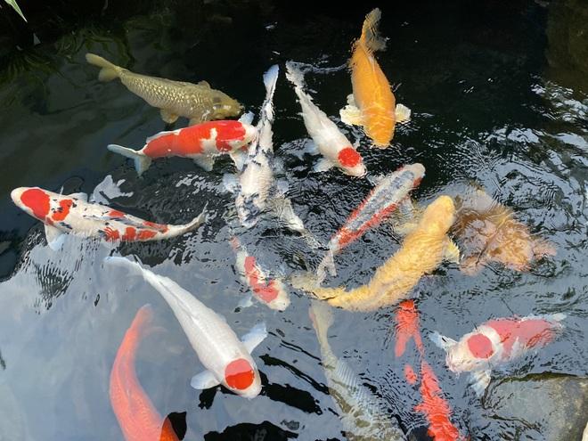 Bỏ nghề kỹ sư về quê đào ao nuôi cá, 9x Hải Phòng kiếm tiền tỷ đều tay - 3