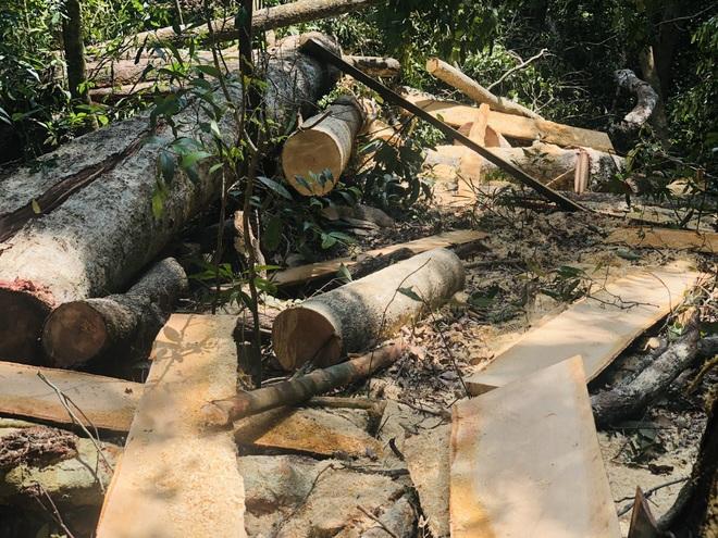 Phó Thủ tướng chỉ đạo xử lý nghiêm vụ phá rừng mà báo Dân trí phản ánh - 3