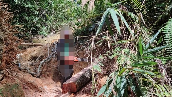 Phó Thủ tướng chỉ đạo xử lý nghiêm vụ phá rừng mà báo Dân trí phản ánh - 2