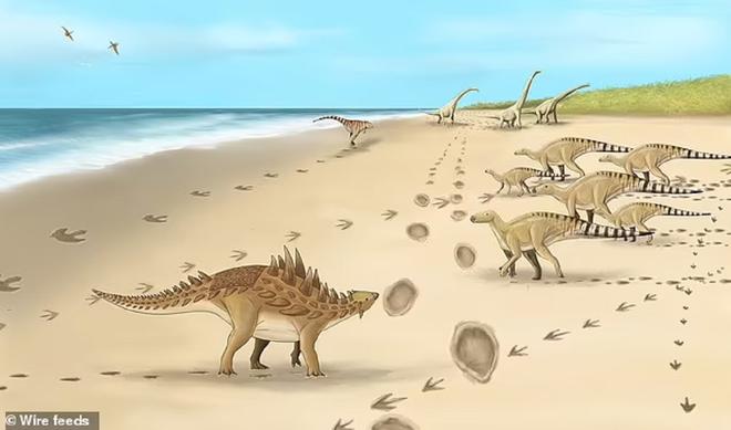 Phát hiện dấu chân của loài khủng long cuối cùng cách đây 110 triệu năm - 2