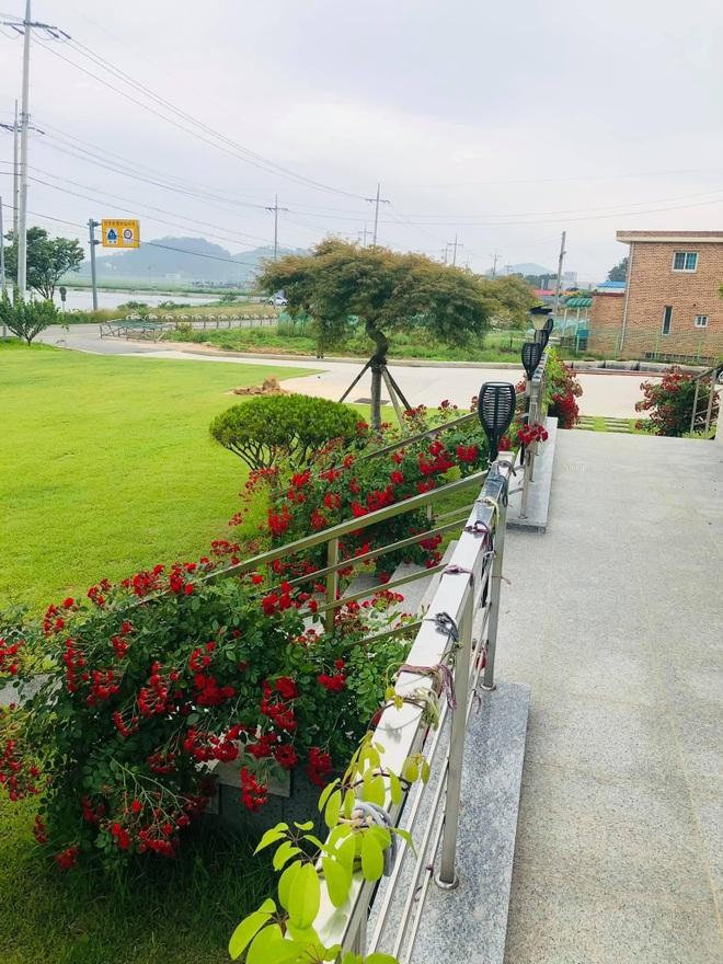 Nhà vườn 2.000m2 giữa cảnh sơn thủy hữu tình của nàng dâu Việt ở Hàn Quốc - 2