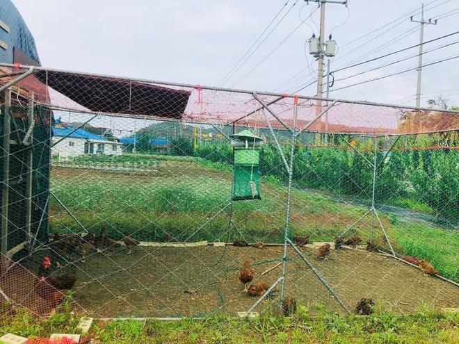 Nhà vườn 2.000m2 giữa cảnh sơn thủy hữu tình của nàng dâu Việt ở Hàn Quốc - 9