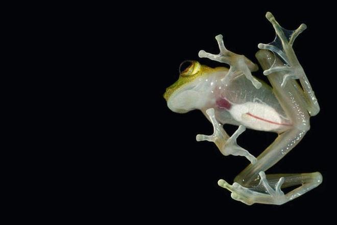 6 loài động vật kỳ dị nhất thế giới - 1