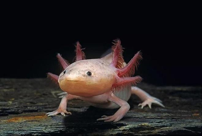 6 loài động vật kỳ dị nhất thế giới - 3