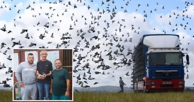 Hàng ngàn chim bồ câu mất tích không dấu vết - 2