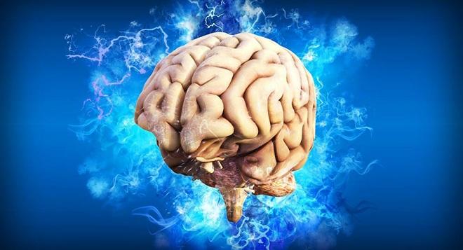 Tìm thấy tế bào thời gian trong não người - 1
