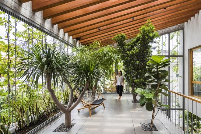 Căn nhà giống như công viên thu nhỏ với đủ loại cây bên trong ở TPHCM - 5