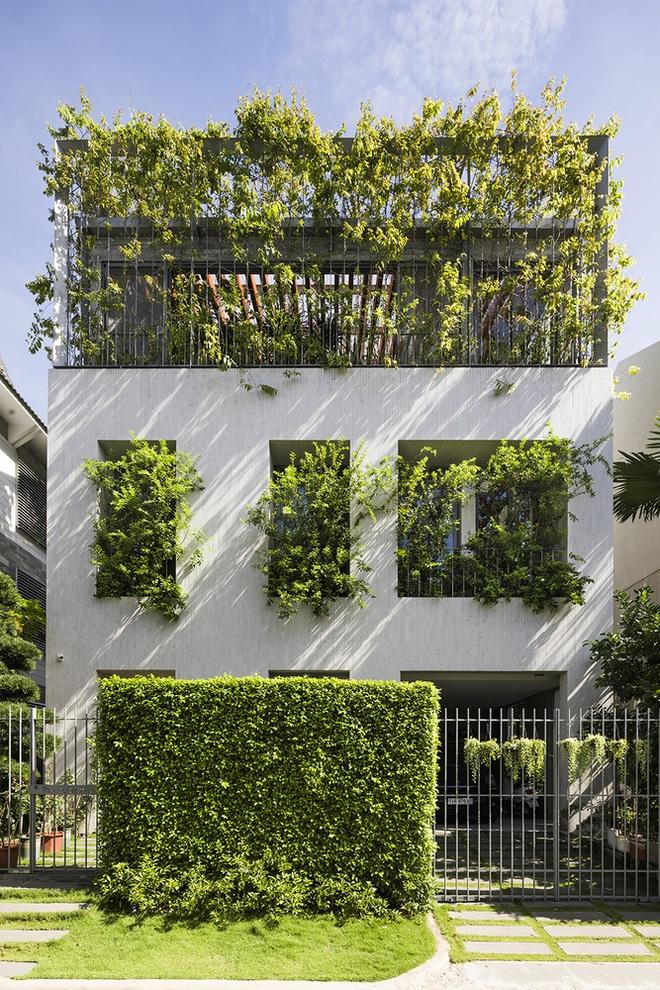 Căn nhà giống như công viên thu nhỏ với đủ loại cây bên trong ở TPHCM - 6