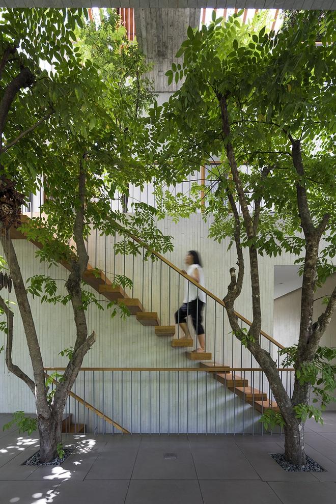 Căn nhà giống như công viên thu nhỏ với đủ loại cây bên trong ở TPHCM - 8