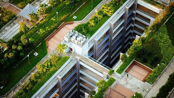 Nơi đầu tiên trên thế giới bắt người dân phải trồng cây trên mái nhà - 1