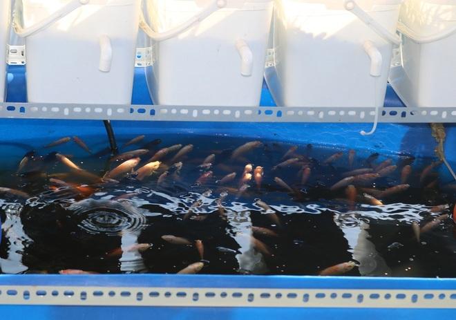 Những ông bố Việt đảm đang: Làm vườn trĩu cành, cá tung tăng trong sân - 6