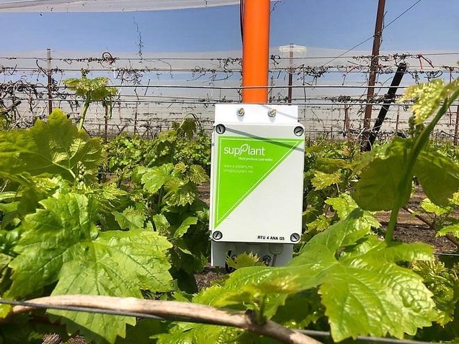 Bất ngờ thiết bị thông minh, đo căng thẳng của cây trồng để tưới nước - 1