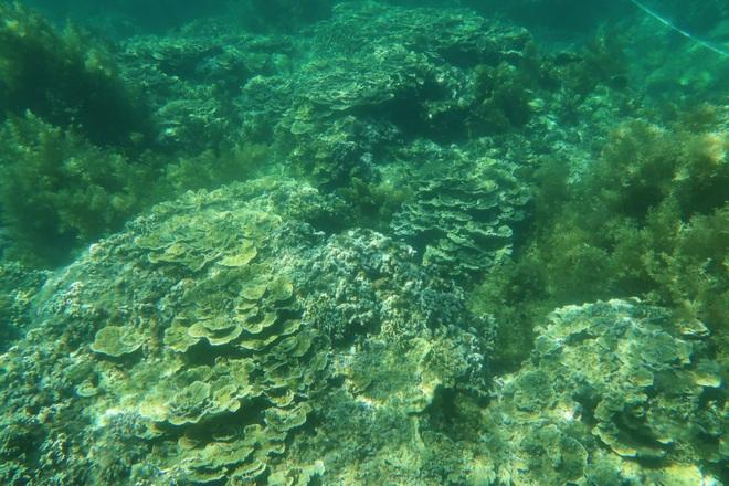 Khám phá rạn san hô muôn sắc màu ở thiên đường biển Kỳ Co- Eo Gió - 1