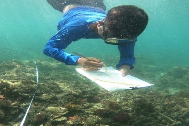 Khám phá rạn san hô muôn sắc màu ở thiên đường biển Kỳ Co- Eo Gió - 3