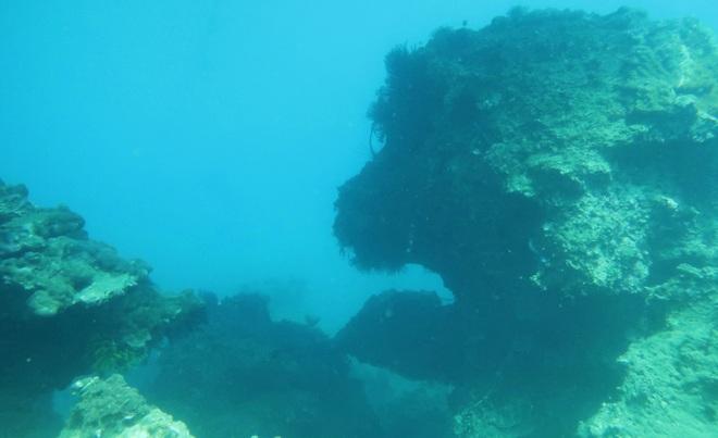 Khám phá rạn san hô muôn sắc màu ở thiên đường biển Kỳ Co- Eo Gió - 9