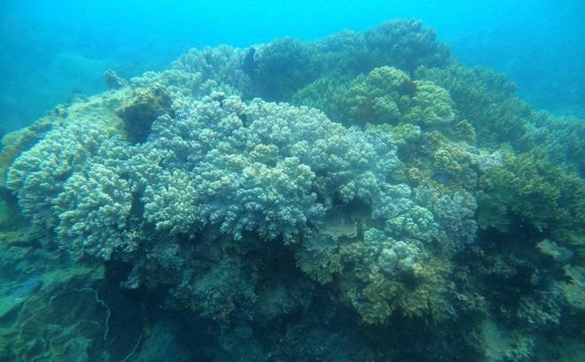 Khám phá rạn san hô muôn sắc màu ở thiên đường biển Kỳ Co- Eo Gió - 6