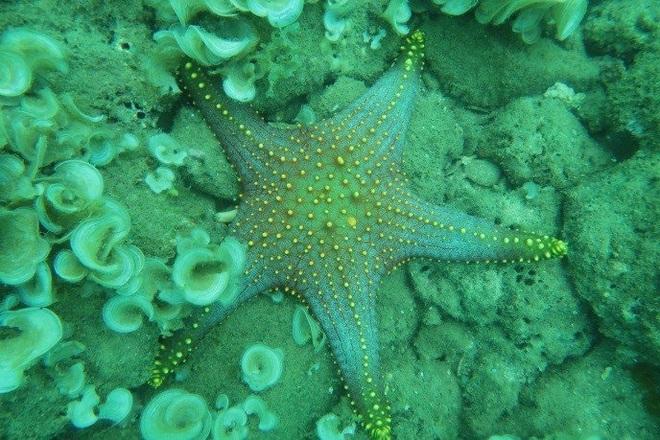Khám phá rạn san hô muôn sắc màu ở thiên đường biển Kỳ Co- Eo Gió - 7