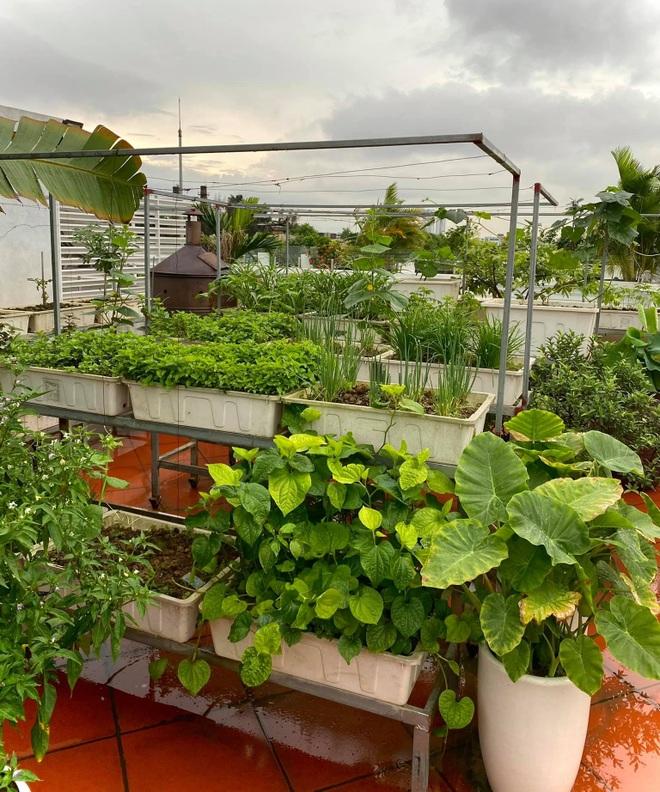 Mẹ đảm Hải Phòng phủ xanh biệt thự bằng vườn rau, trái 120m2 - 3