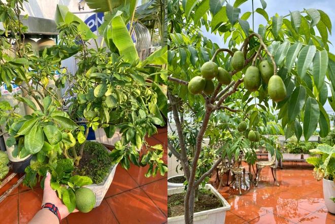 Mẹ đảm Hải Phòng phủ xanh biệt thự bằng vườn rau, trái 120m2 - 6