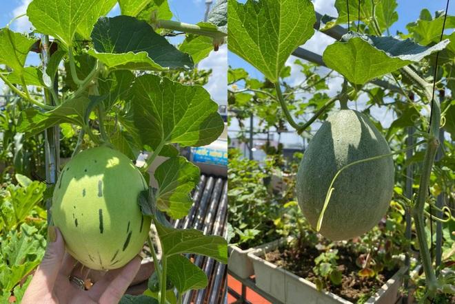 Mẹ đảm Hải Phòng phủ xanh biệt thự bằng vườn rau, trái 120m2 - 9
