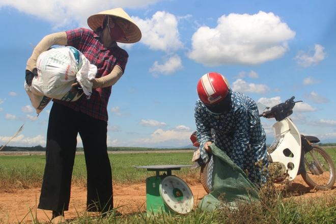 Thu nhập cao hơn cây lúa nhờ trồng dưa trái vụ - 9