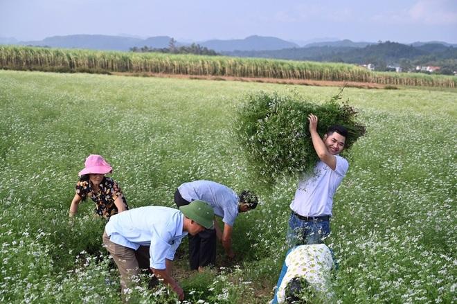 Chàng trai nâng tầm thảo mộc Việt, giúp bà con có công ăn việc làm - 2