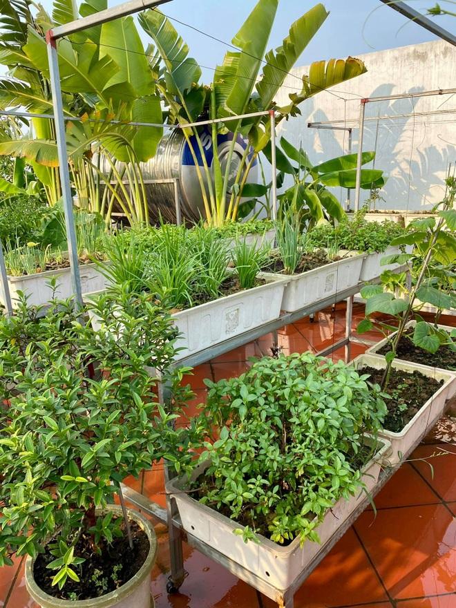 Mẹ đảm Hải Phòng phủ xanh biệt thự bằng vườn rau, trái 120m2 - 10