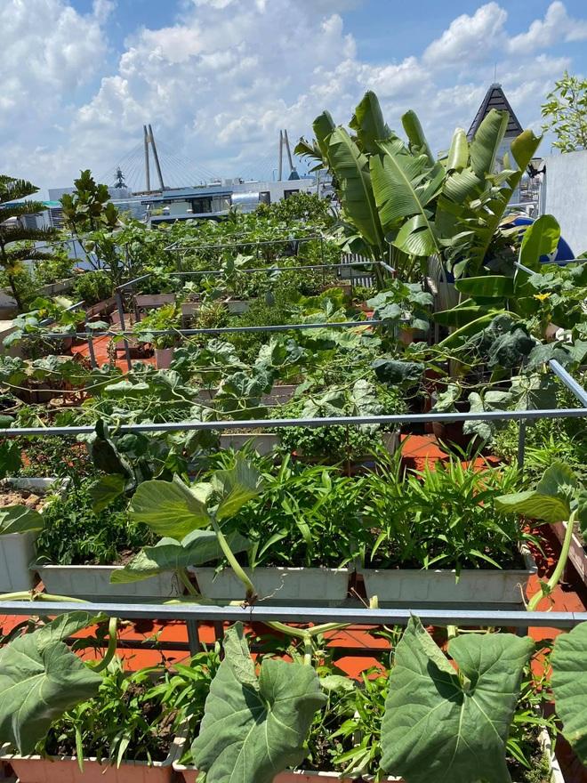 Mẹ đảm Hải Phòng phủ xanh biệt thự bằng vườn rau, trái 120m2 - 12
