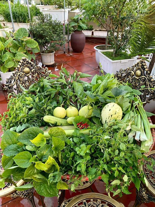 Mẹ đảm Hải Phòng phủ xanh biệt thự bằng vườn rau, trái 120m2 - 13