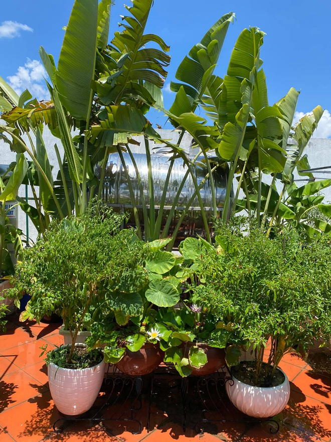 Mẹ đảm Hải Phòng phủ xanh biệt thự bằng vườn rau, trái 120m2 - 1