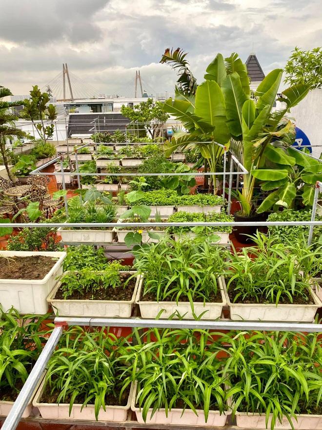 Mẹ đảm Hải Phòng phủ xanh biệt thự bằng vườn rau, trái 120m2 - 2