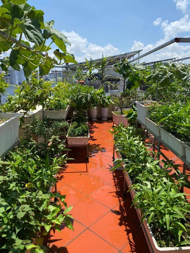 Mẹ đảm Hải Phòng phủ xanh biệt thự bằng vườn rau, trái 120m2 - 4